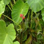 Garden Plants - DileVale