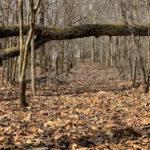 Tree Leaves - DileVale