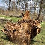 Tree Trunk - DileVale