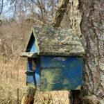 Bird Box - DileVale