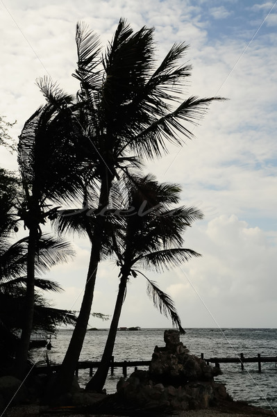Boat Pier – Aruba - DileVale