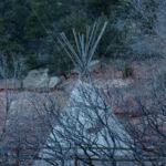 Cliff Dwellings – Colorado - DileVale
