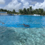 Dolphins – Riviera Maya – Mexico - DileVale