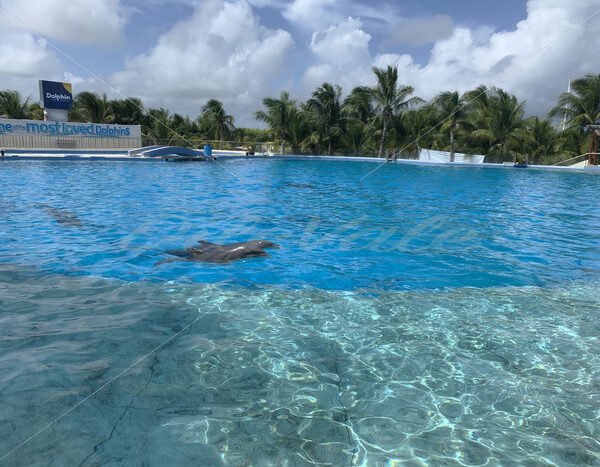 Dolphins – Riviera Maya – Mexico - DileVale
