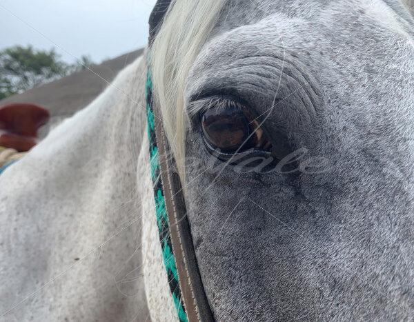 Horse – Riviera Maya – Mexico - DileVale
