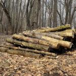 Logs - DileVale