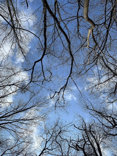 Tree Branches - DileVale