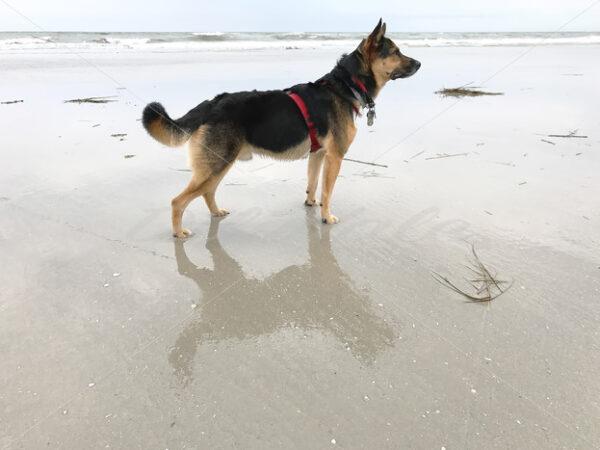 Wildwood Beach – New Jersey - DileVale