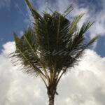 Palm Tree – Punta Cana - DileVale