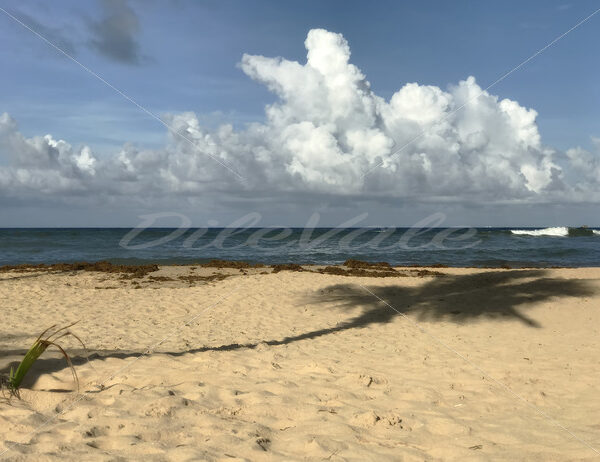 Punta Cana – Dominican Republic - DileVale